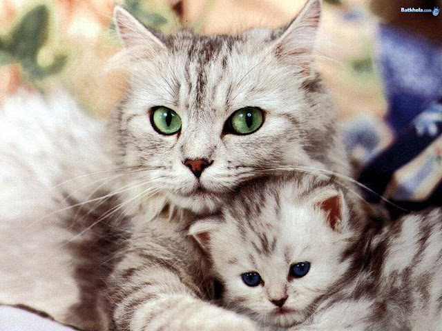 so freakin cute cats