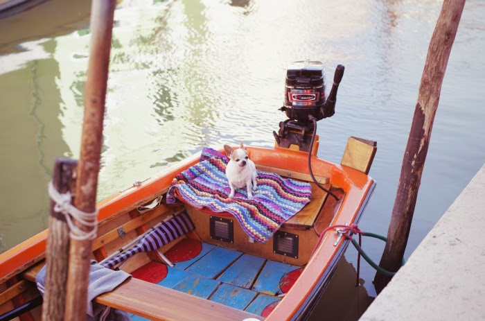dog on a boat in burano taken by simon jv