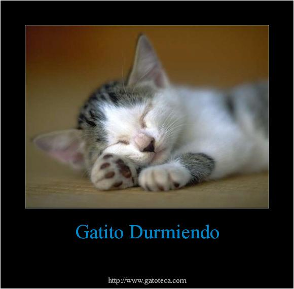 imagenes tiernas de gatos con frases de amor imagenes de amor hd