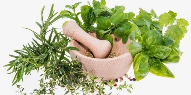 5 Tanaman Herbal Dapur Super Untuk Kesehatan