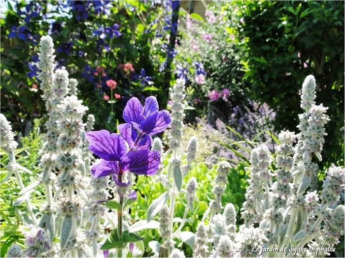 Le jardin de sylvie en photos une promenade au jardin for Au jardin de sylvie