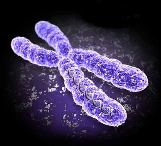 Anomalías cromosómicas y desarrollo psicológico