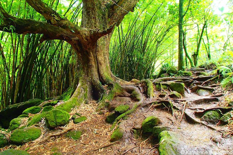 Hanakapi'ai Falls Trail Kauai Hawaii