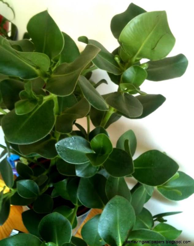Identify Common House Plants   Inspiring Home Design