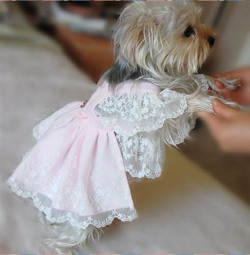 Dog boutique designer dog clothing and accessories for for Dog wedding dresses