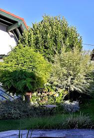 Garten