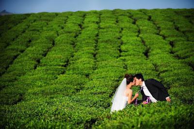 Nhiều cặp uyên ương đã có những bộ ảnh cực lãng mạn tại địa điểm chụp ảnh cưới đẹp mê hồn này