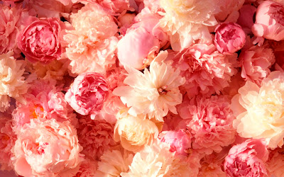 carnation flower picture