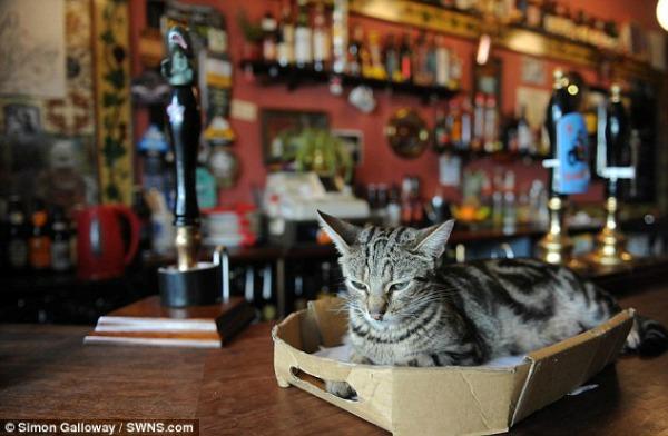 pub with cats bristol