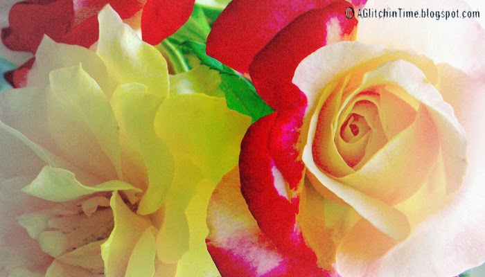 Roses- up close.