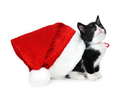 Gatito listo para Navidad - Kitten ready for Christmas