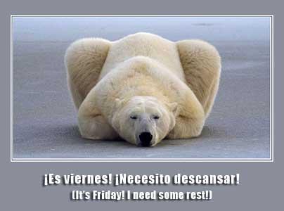 Polar bear resting