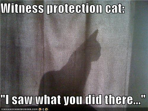 [Image: witness-protection-cat.jpg]