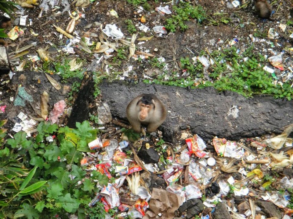 Jose Verdys Diary Liburan Ke Berastagi Dan Simalem Resort 11 13 Februari 2012
