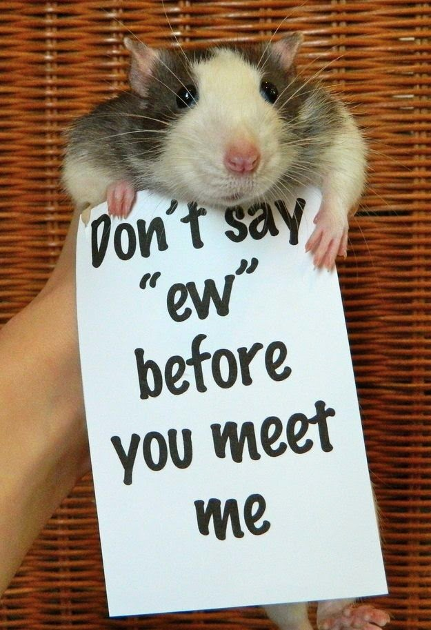 Funny animals of the week - 22 August 2014 (40 pics), funny animal photo, cute animals, animal pics
