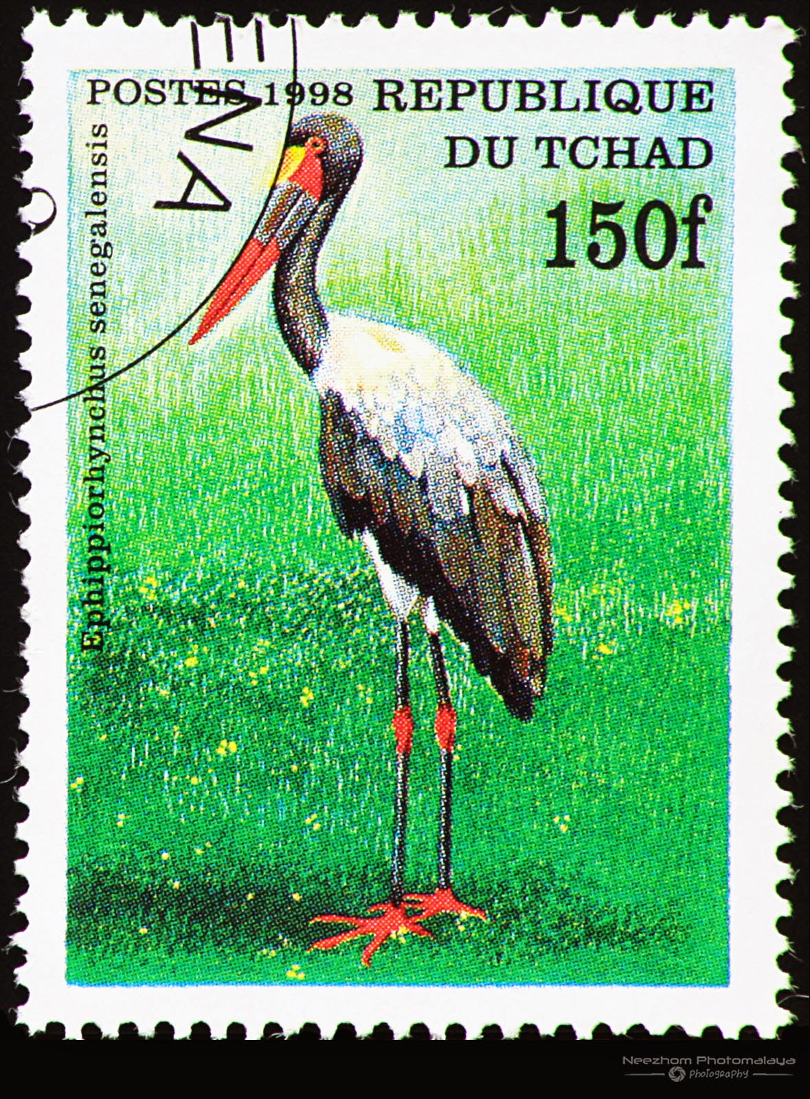 Chad 1998 Birds stamp - Saddle-billed Stork (Ephippiorhynchus senegalensis) 150 f