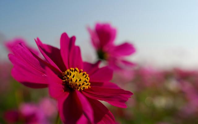 Flor Violeta Hermosas Fotos de Flores - Imágenes de Flores en HD