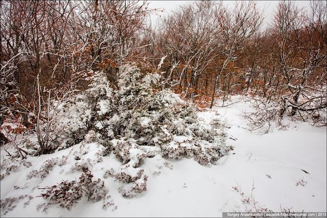 Бело-оранжевое безумие крымской зимы