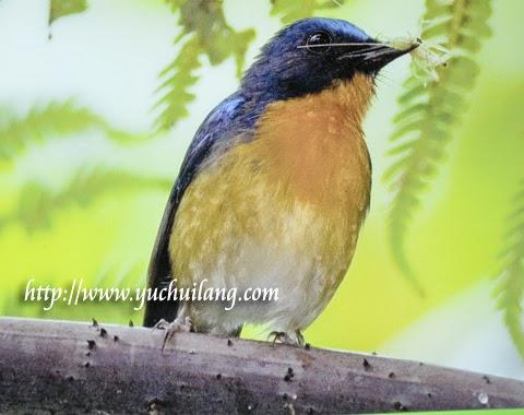 Pusat Penerangan Burung Bukit Fraser