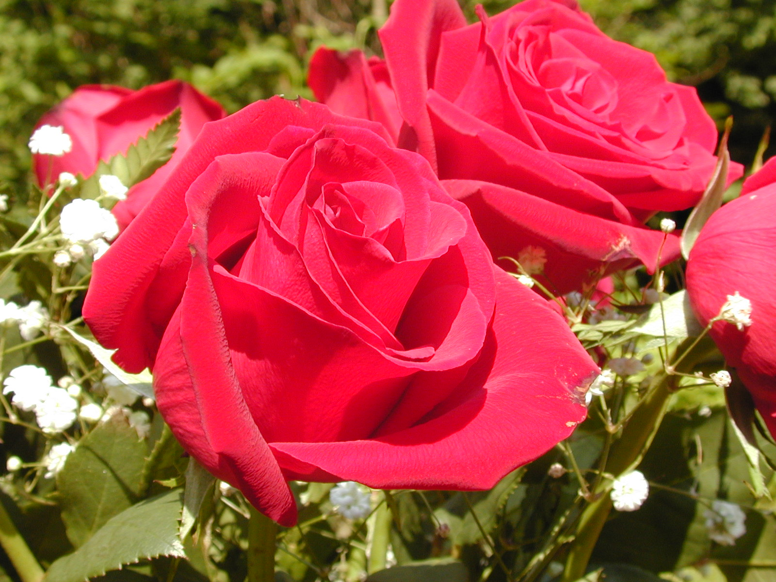 Beautiful Red Flowers Wallpapers Latest News