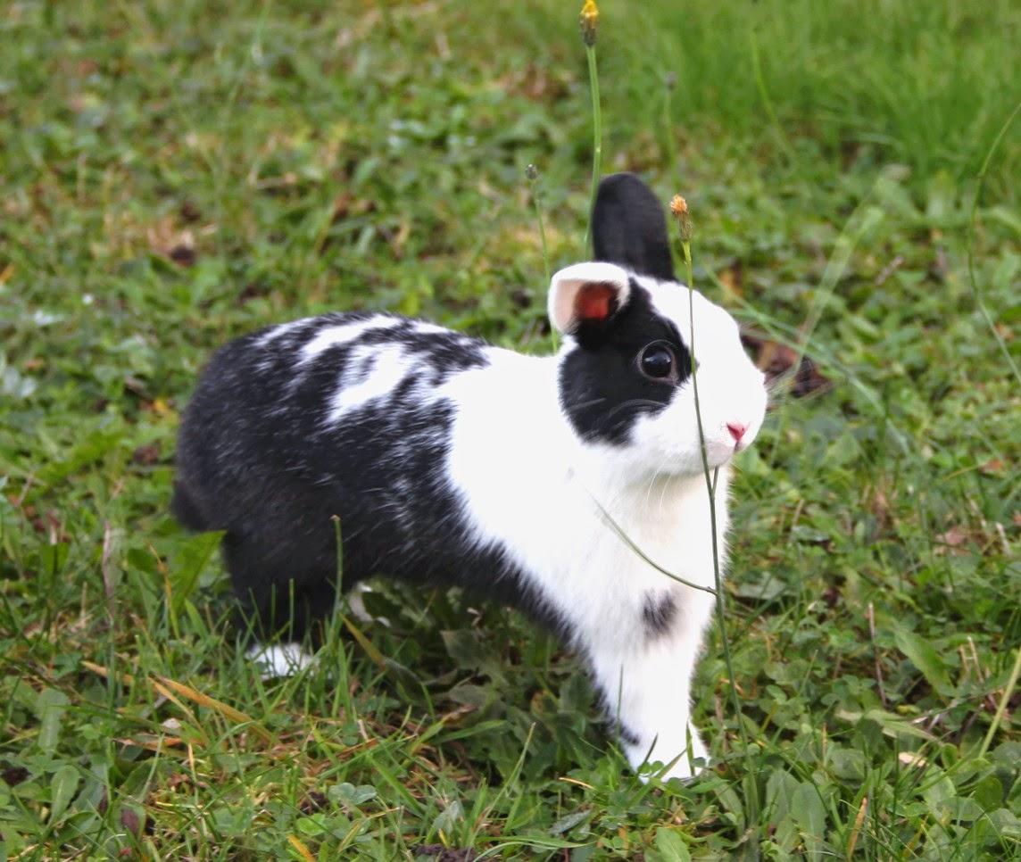 nature animal pet cute mignon