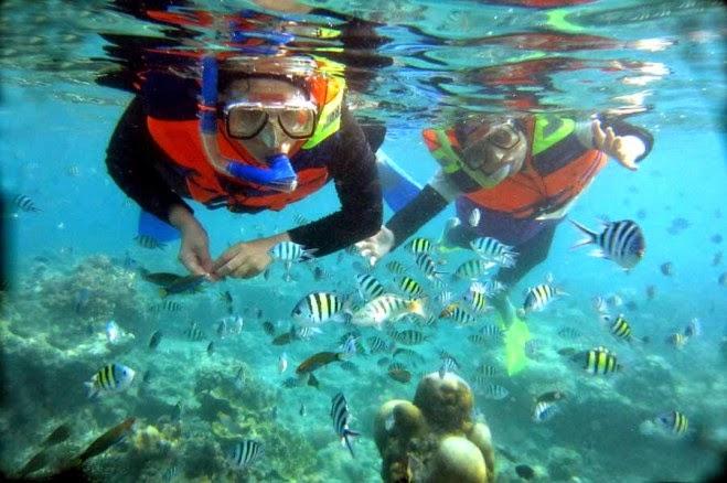 Snorkling - Wisata Indonesia | Seputar Informasi Tempat Wisata Indonesia
