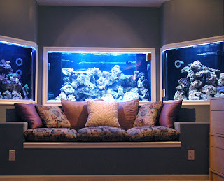 tips+merawat+akuarium+air+laut Tips Merawat Ikan di Akuarium