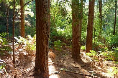 Stoodley arboretum, Oct 2014