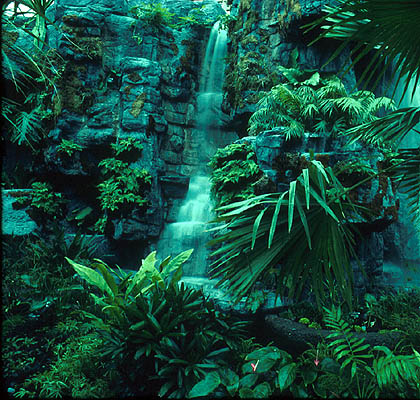Tropical Rainforests   Green Plants On The Earth