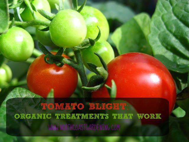 http://northcoastgardening.com/2015/05/tomato-blight/