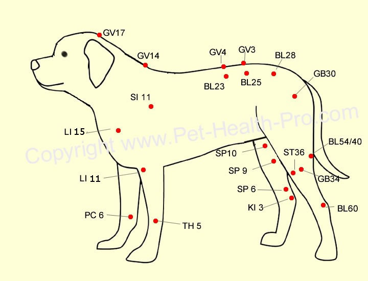 Meridian Charts For Dog Acupuncture http://www.guidinginstincts.com/2012/09/pet-acupressure-ancient-treatment.html