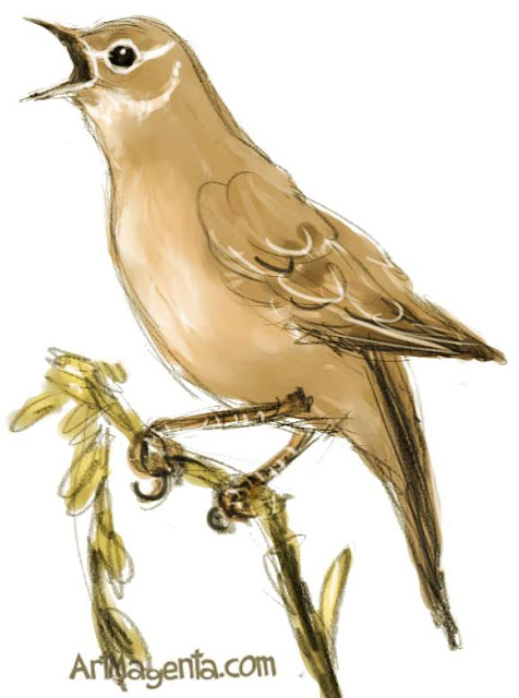 Savi's warbler sketch painting. Bird art drawing by illustrator Artmagenta.