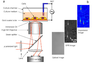 Electrical Impedance Microscopy