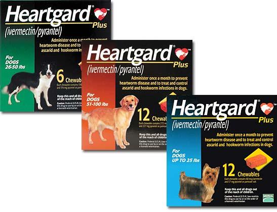 How Often Do Dogs Get Heartworm Medicine