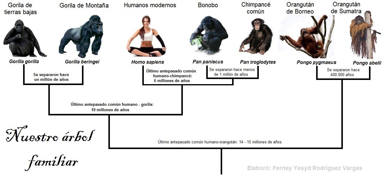 Genoma del Gorila reivindica la evolución humana - El Eco de los Pasos