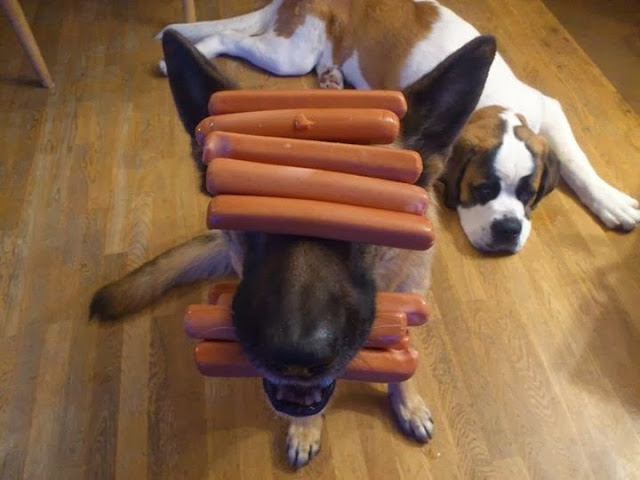 Cute dogs - part 3 (50 pics), dog balances sausages on his head