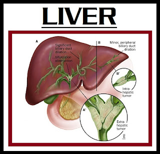 survival rate for liver cancer | liver cancer frequently spreads to the lung metastases, which are diagnosed by radiologic (X-ray) studies