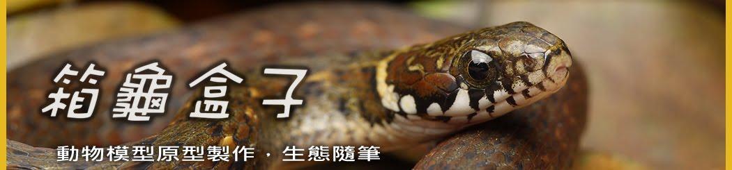 箱龜盒子_動物模型原型製作,生態隨筆,動物原型師sun