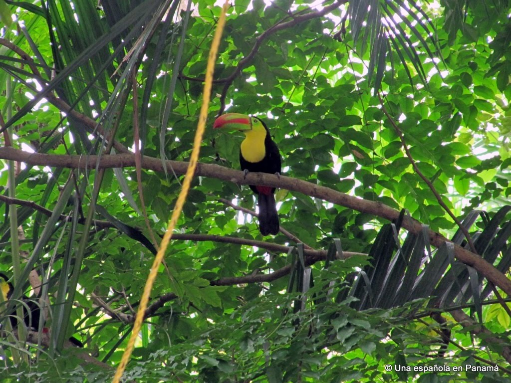 fauna vida salvaje aves parque natural metropolitano