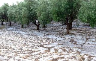ΑΓΡΟΤΙΚΟΣ ΣΥΛΛΟΓΟΣ ΚΑΣΤΟΡΙΑΣ, Ανακοίνωση για την έντονη χαλαζόπτωση στο νομό Καστοριάς