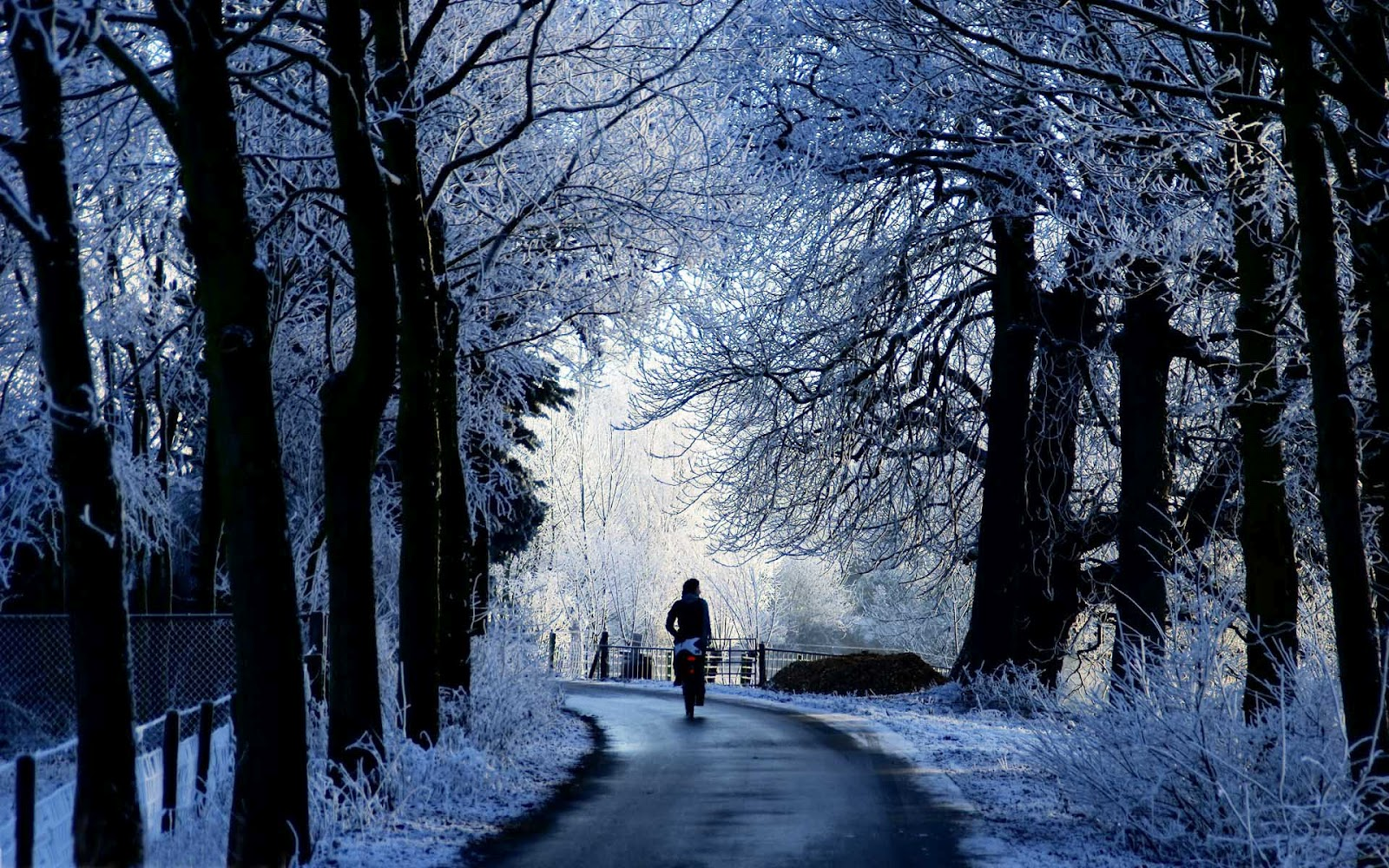 hd-winter-achtergrond-met-een-fietser-op-het-fietspad-in-de-winter-wallpaper-foto.jpg