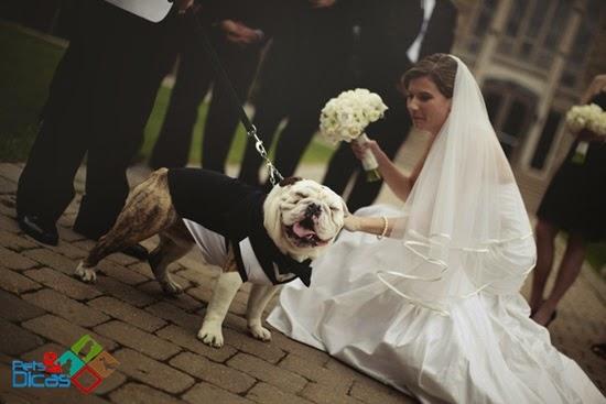 Cachorros em casamento