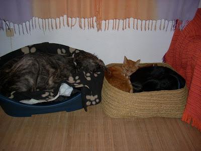 EDUCAN Alicante Adiestramiento canino y modificación de conductas inadecuadas a domicilio