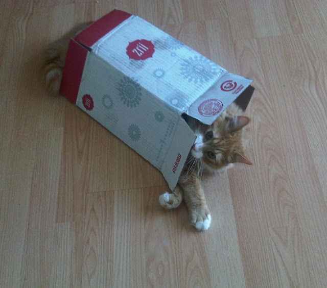 Murchyk Cat in a Zrii Box