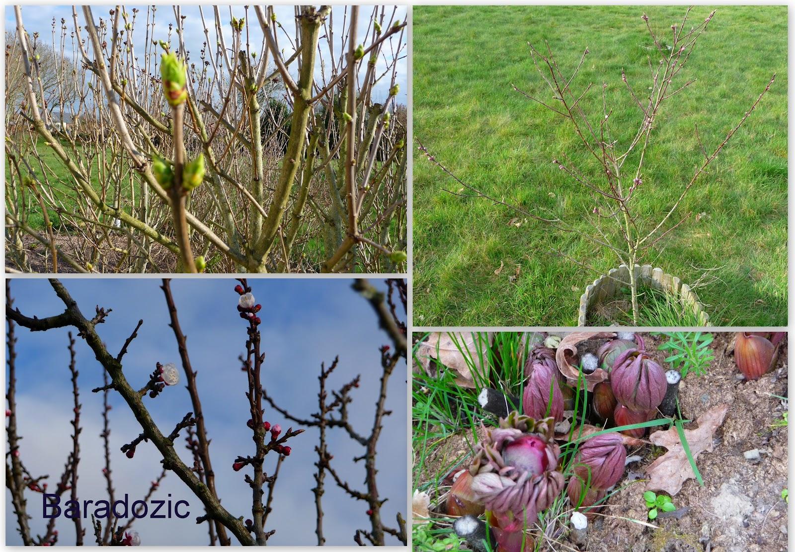 C 39 est le printemps au jardin les d lices de baradozic for Jardin 4 moineaux