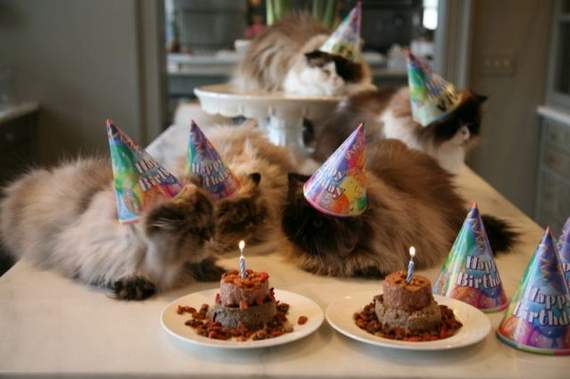Кот с тортом фото