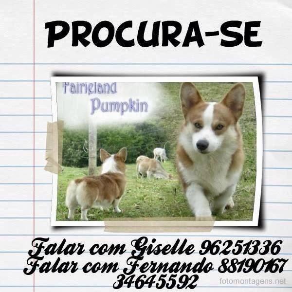DESAPARECIDO - Criciúma  / Santa Catarina