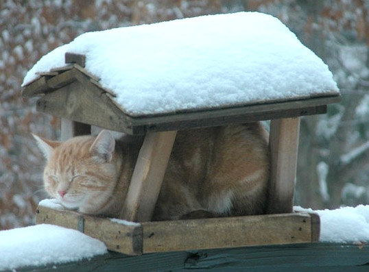 How To Keep Outside Cats Warm During Winter
