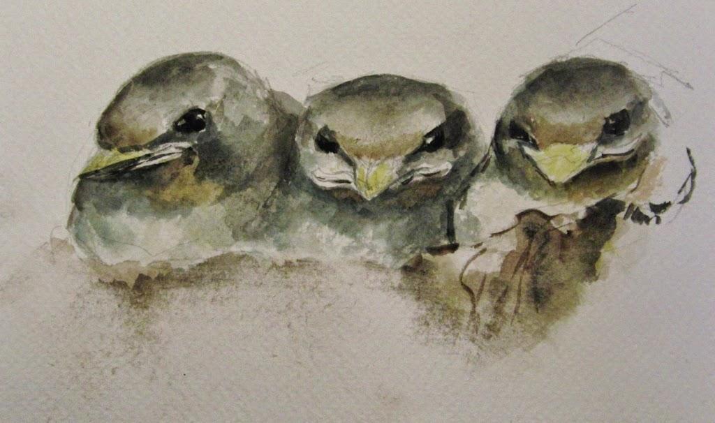 schetsen, aquarel, vogels, zwaluwen, Paula Hondsmerk Art