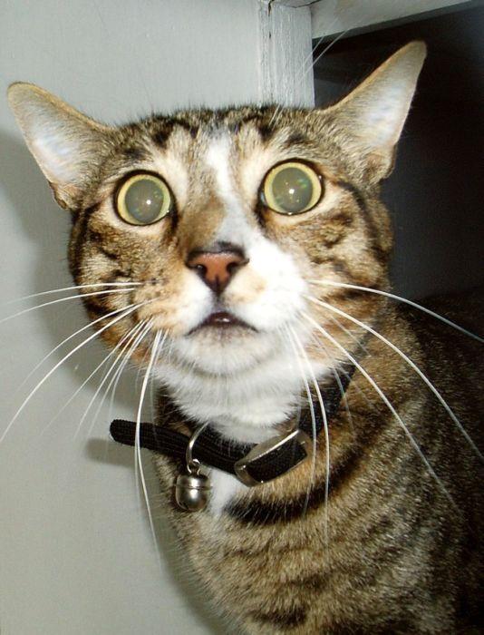 Omg wtf cat